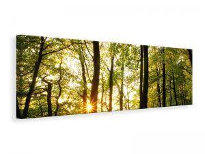Ljuddämpande tavla - Sunset Between Trees - SilentSwede