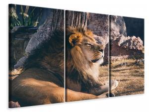 Ljuddämpande tavla - Lion is sunning himself - SilentSwede